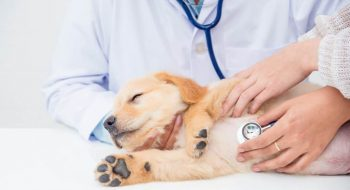 Klinika-weterynaryjna-1024x683